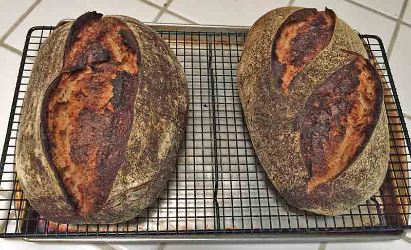 dutch oven versus hearth baking it s a draw the fresh loaf