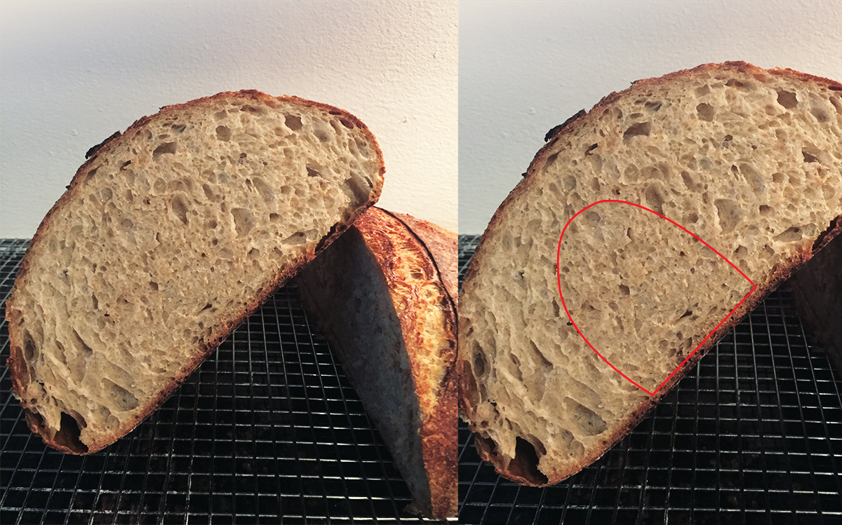 dense crumb section