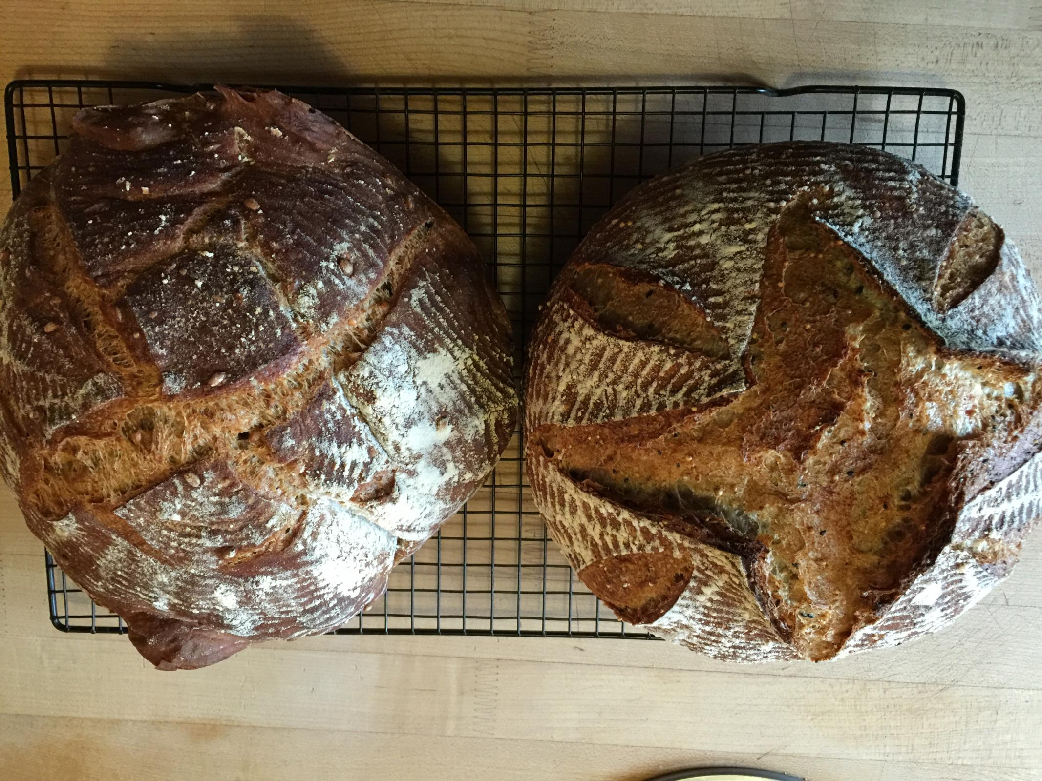 bien cuit loaves over proofing in the fridge | the fresh loaf