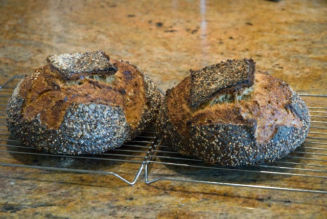 Tartine Semolina Loaves