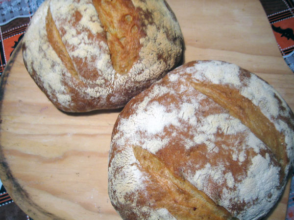 Pugliese loaves