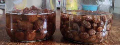Yeast water jars